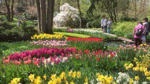 Zo maak je de tuin weer lenteklaar