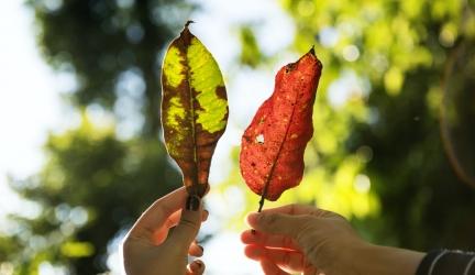Herfstbladeren in de tuin; dit kun je ermee doen