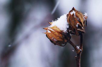 Tuin winterklaar maken: zo doe je dat