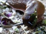 Nooit meer last van slakken in de tuin met deze tips